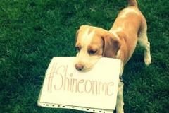Šta je #shineonme?