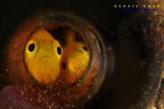 NEČUJNO 3: Treći festival kratkog podvodnog filma! Kompletan program i satnica festivala