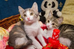 MRNJAU FEST: Festival posvećen mačkama u Domu omladine