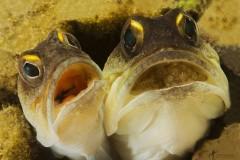Nečujno 5: Festival kratkog podvodnog filma