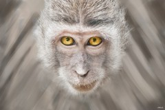 Izložba JA MAJMUN: Fotograf Aleksandar Jovković predstavlja portrete majmuna! Sveta šuma majmuna, Bali, Indonezija